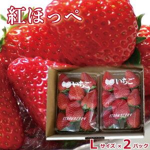 いちご ギフト 山梨県産 紅ほっぺ イチゴ 苺 Lサイズ  ×2パック 新鮮 朝採れ 摘みたて発送 予約販売 産地直送