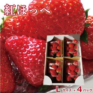 いちご ギフト 山梨県産 紅ほっぺ イチゴ 苺 Lサイズ ×4パック 新鮮 朝採れ 摘みたて発送 予約販売 産地直送