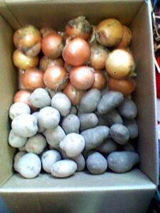 期間限定 北海道産農産物セット【送料無料】11月中旬終了