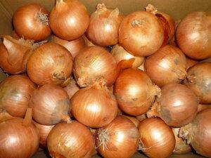 送料無料 北海道産 無農薬、無化学肥料栽培玉ねぎ(有機JAS付)M〜2Lサイズ 10kg