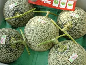 送料無料 北海道追分産農協共選追分アサヒメロン糖度14度以上 秀品 3〜6玉入り 8kg元箱