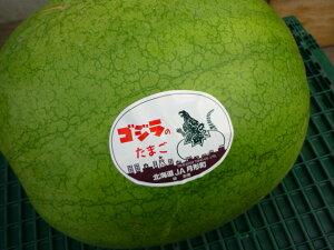 送料無料 これはゴジラの卵!? 北海道月形産でか〜いゴジラの卵フルーティな味 なんと6kg以上の貴重なスイカ