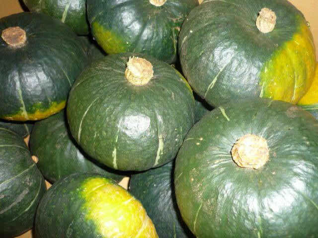 北海道産小さいけど美味しい丸ごと使えるかわいいかぼちゃ坊ちゃんかぼちゃ 1玉