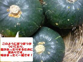北海道産小さいけど美味しい丸ごと使えるかわいいかぼちゃ訳あり坊ちゃんかぼちゃ 1玉 ハロウィンにも!!