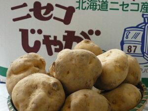 送料無料!あのじゃがいもの名産地 北海道ニセコより美味しさ抜群の新じゃがいもだんしゃく皮もむきやすい粒ぞろいのLサイズ 10kg