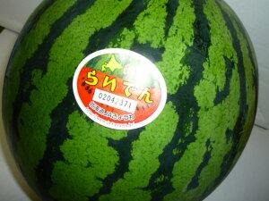 送料無料 北海道を代表するスイカ 北海道共和町産訳なしの秀品 らいでんすいか糖度11度以上 3Lサイズ以上で1玉当たり6kg以上