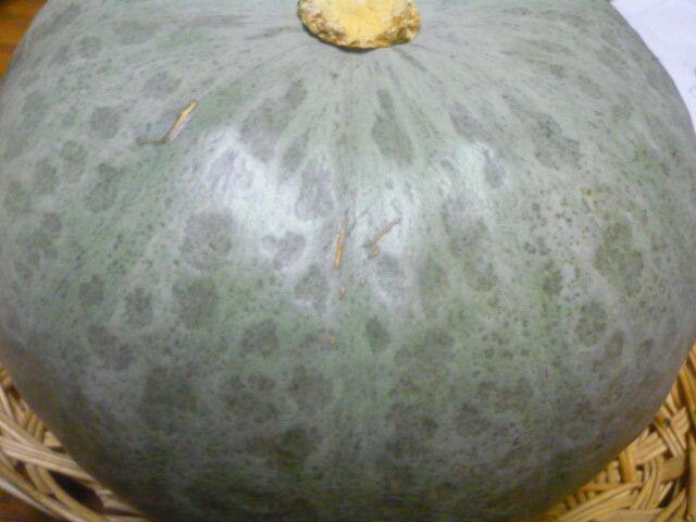 北海道産ほくほく うま〜いじゃんぼ雪化粧かぼちゃ 1玉入り 2kg以上