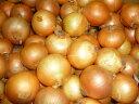 【出荷開始しました】送料無料 北海道産小さい玉ねぎ丸ごと使えて便利Sサイズたっぷり 20kg