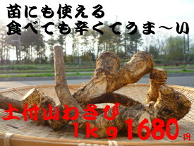 北海道産 苗にも使える土付山わさび1kg うま〜い辛さ