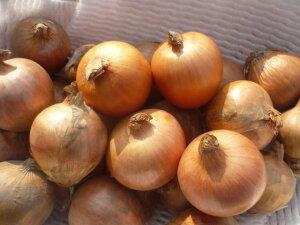 数量限定 北海道産ミニミニ玉ねぎ 丸ごと使えて便利SSサイズ 10kg