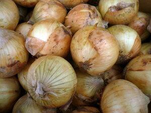 北海道JAきたみらい産しゃきしゃき美味しいサラダ玉ねぎ減農薬栽培品M〜Lサイズ 10kg