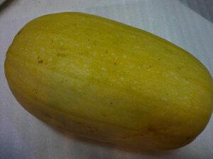北海道産貴重な逸品そうめんかぼちゃ 金糸瓜 1玉入り 約1〜2kg