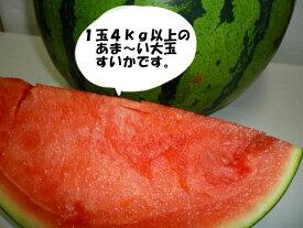 送料無料北海道産訳あり 大玉スイカM〜Lサイズ1玉当たり4kg以上