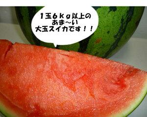 送料無料北海道産訳あり 大玉スイカ3L以上1玉当たり6kg以上大きいすいか!