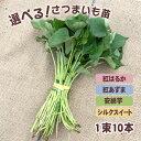 【予約】選べる!さつまいも苗 一束10本入り 安納芋・紅はるか・紅あずま・シルクスイートの4品種の中から 【野菜苗】…