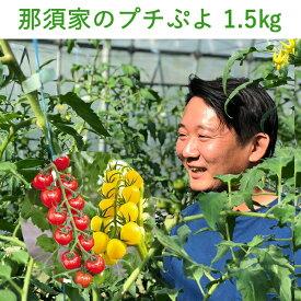 【食べて応援20%クーポン対象商品】トマト ミニトマト プチぷよ 1.5kg 秀品 ぷちぷよ プチプヨ