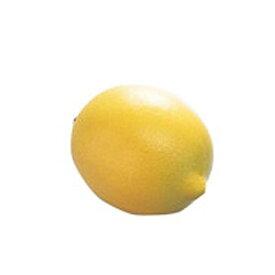 """PLAYWOOD(プレイウッド) / FS-LMN - マラカス - ミュージック シェーカー""""フルーツ""""レモン"""