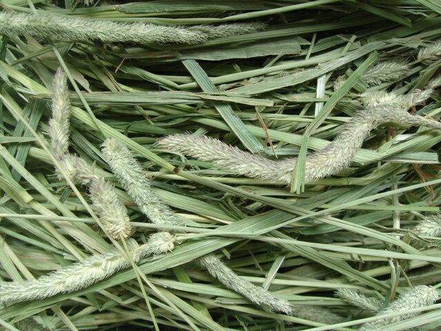 *new crop*29年度アメリカ産プレミアムホースチモシー(牧草)1kg:シングルプレス