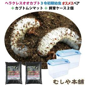 カブトムシが選べる!ヘラクレスオオカブト3令初期幼虫オスメスペア+昆虫マット20L+飼育ケース2個のセット(ヘラクレスヘラクレスorヘラクレスリッキー)