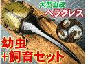 大型極太血統!ヘラクレスオオカブト幼虫(初令〜2令)4頭 +最高級カブト マット(昆虫マット)+飼育ケースのセット