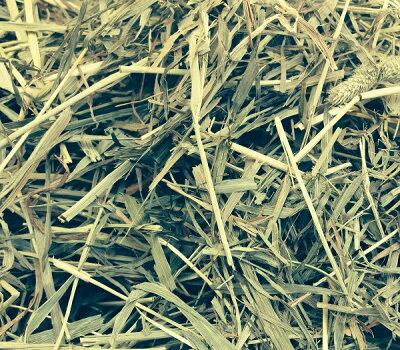 アメリカ二番刈りチモシーダブルプレス