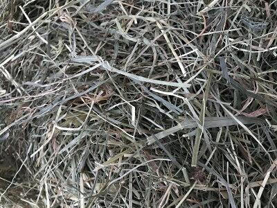 北海道二番刈りチモシー1kgうさぎ、モルモット、チンチラ、テグーにうさぎ牧草チモシー格安うさぎの牧草楽天市場牧草楽天市場楽天市場牧草
