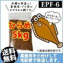 (送料無料※宅配) 日新丸紅飼料ひらめEPF6(浮上性)5kg/コイのごはん・熱帯魚の餌・アロワナのエサ(金魚小屋-希-福岡)