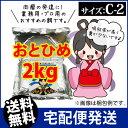 Otohime-c2-02000