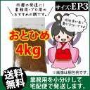 Otohime-ep3-04000