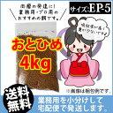 Otohime-ep5-04000