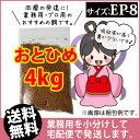 Otohime-ep8-04000