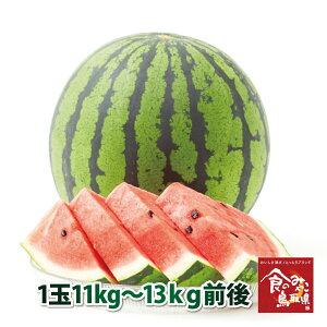 (予約)訳あり 鳥取県産 大栄スイカ 1玉11kg〜13kg (すいか/西瓜)6月10日頃より順次発送