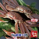 タグ付き特上松葉ガニ(活)特大サイズ2枚で2kg前後 送料無料(ずわい蟹 ずわいがに ズワイガニ かに カニ 蟹 生 松葉が…
