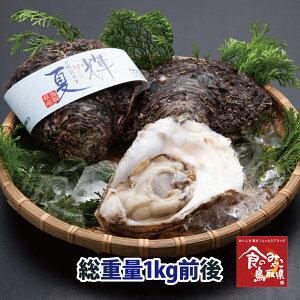 まずはお試し少量セット 鳥取県産 ブランド天然岩がき 夏輝 約1kg詰め 2個〜3個(岩ガキ/岩牡蠣/カキ)生食用 牡蠣 送料無料