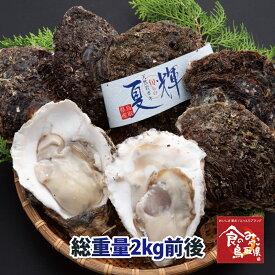 鳥取県産 ブランド天然岩がき 夏輝 約2kg詰め 4個〜6個程度(岩ガキ/岩牡蠣/カキ) 送料無料 生食用 牡蠣