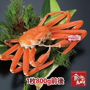 【ご予約】タグ付き特上松葉ガニ(ボイル)大サイズ1枚800g前後 送料無料 (ズワイガニ 姿 ずわい蟹 ずわいがに かに カニ 蟹)