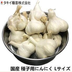 青森県産 薬剤処理無し ホワイト種 ニンニク種子 Lサイズ 約1kg(約10〜12個)