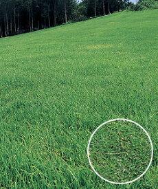 【在庫限り/2020年4月以降入荷予定】タキイ種苗 芝の種 野芝 ゼニス 1kg