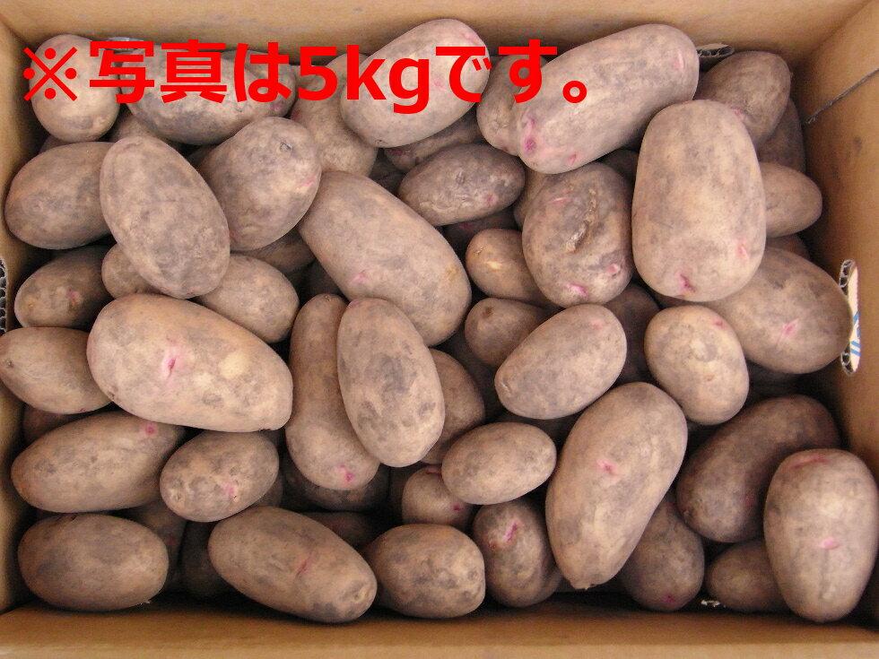 北海道大樹町産 じゃがいも 種芋 はるか 10Kg