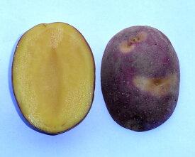 北海道大樹町産 じゃがいも 種芋 インカのひとみ 1Kg(小分け)