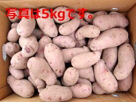 北海道大樹町産 じゃがいも 種芋 ノーザンルビー 10Kg