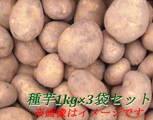 北海道大樹町産 じゃがいも 種芋 1kg×3袋セット 男爵芋/キタアカリ/とうや/メークイン/ピルカ/はるか/さやか/紫月/きたかむい の中からお選びください