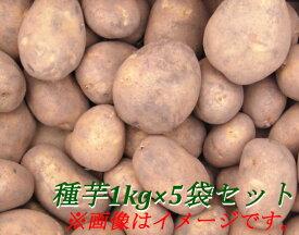 北海道大樹町産 じゃがいも 種芋 1kg×5袋セット 男爵芋/キタアカリ/とうや/メークイン/さやか/紫月/きたかむい の中からお選びください