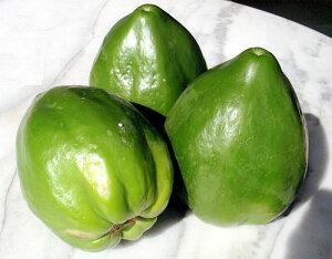 沖縄・石垣島より♪青パパイヤ(野菜用パパイヤ)約1kg(1〜3個)