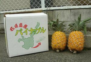 沖縄・石垣島より☆彡くがにパイナップル(くがにパイン)2〜3個(約3kg)