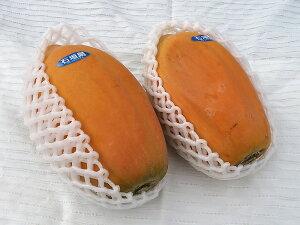 完熟フルーツパパイヤ詰め合わせ 約2kg(2〜5個)沖縄・石垣島から直送