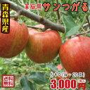 青森りんご☆送料無料☆家庭用サンつがる5キロ14〜20玉 発送は9月13日頃から