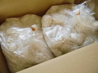 米麹 生麹(5kg×2個)