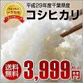 平成29年産新米コシヒカリ玄米10kg1等米お米精米無料【お米】【千葉県産】【米】【コメ】【精米】※9月中旬頃より出荷開始