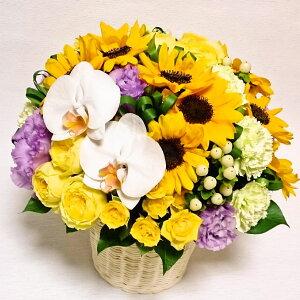 [送料込][父の日花]ひまわり・黄色バラ胡蝶蘭の丸いアレンジ